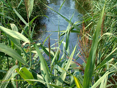Stormwater treatment wetlands